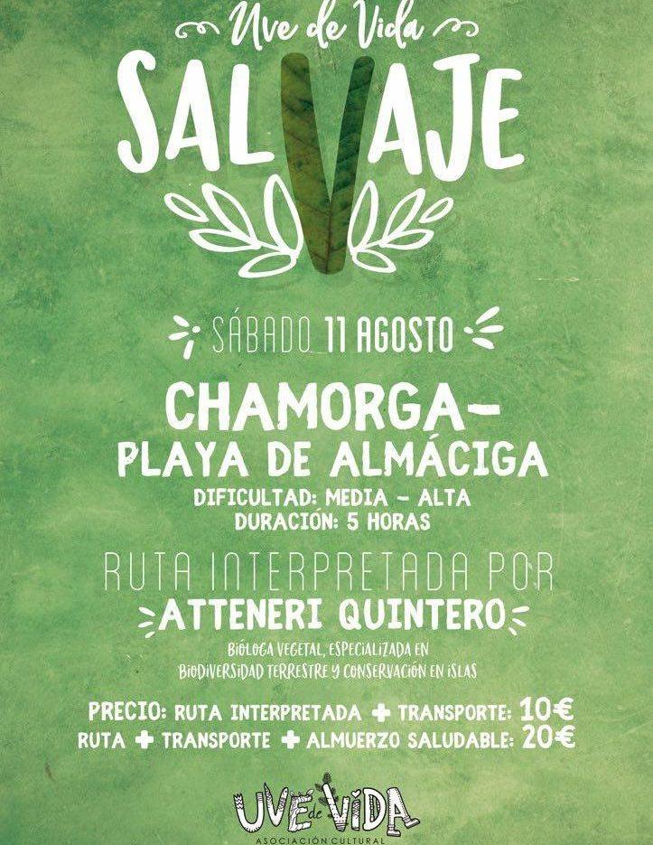 SalVaje Chamorga-Playa de Almáciga