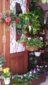 Flores - Floristería FLOR - Núñez de la Peña 32